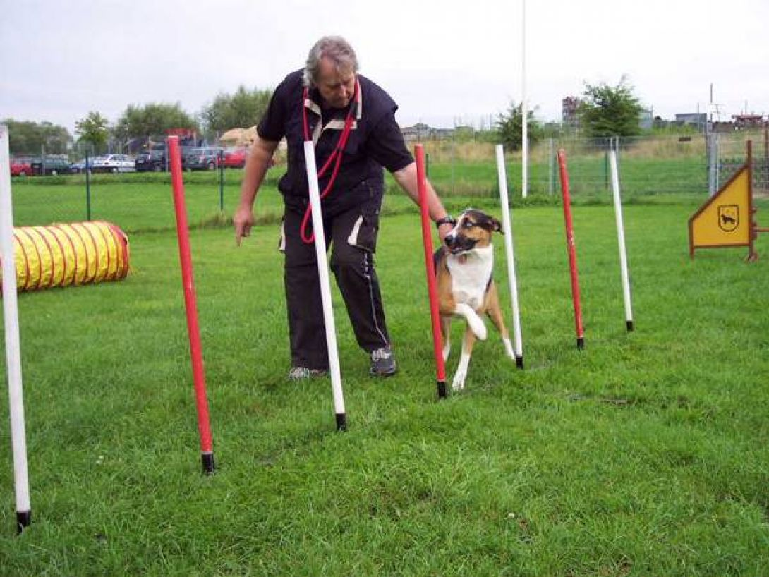 Agility Training: Wolfgang mit Jule (Husky/Collie-Mischling)