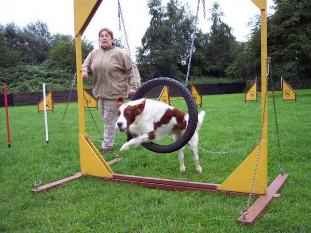 Agility Training Setter: Renate mit Danny